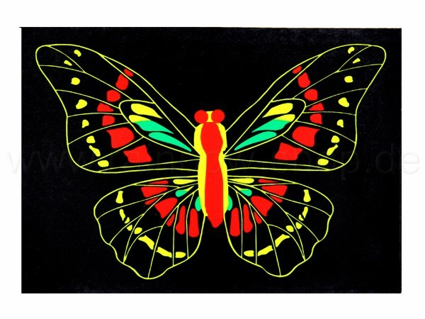 Shirt-22 EL Folie  schwarz Motiv:  Schmetterling